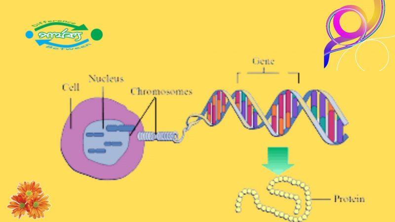 ডিএনএ (DNA) এবং আরএনএ (RNA) এর মধ্যে পার্থক্য